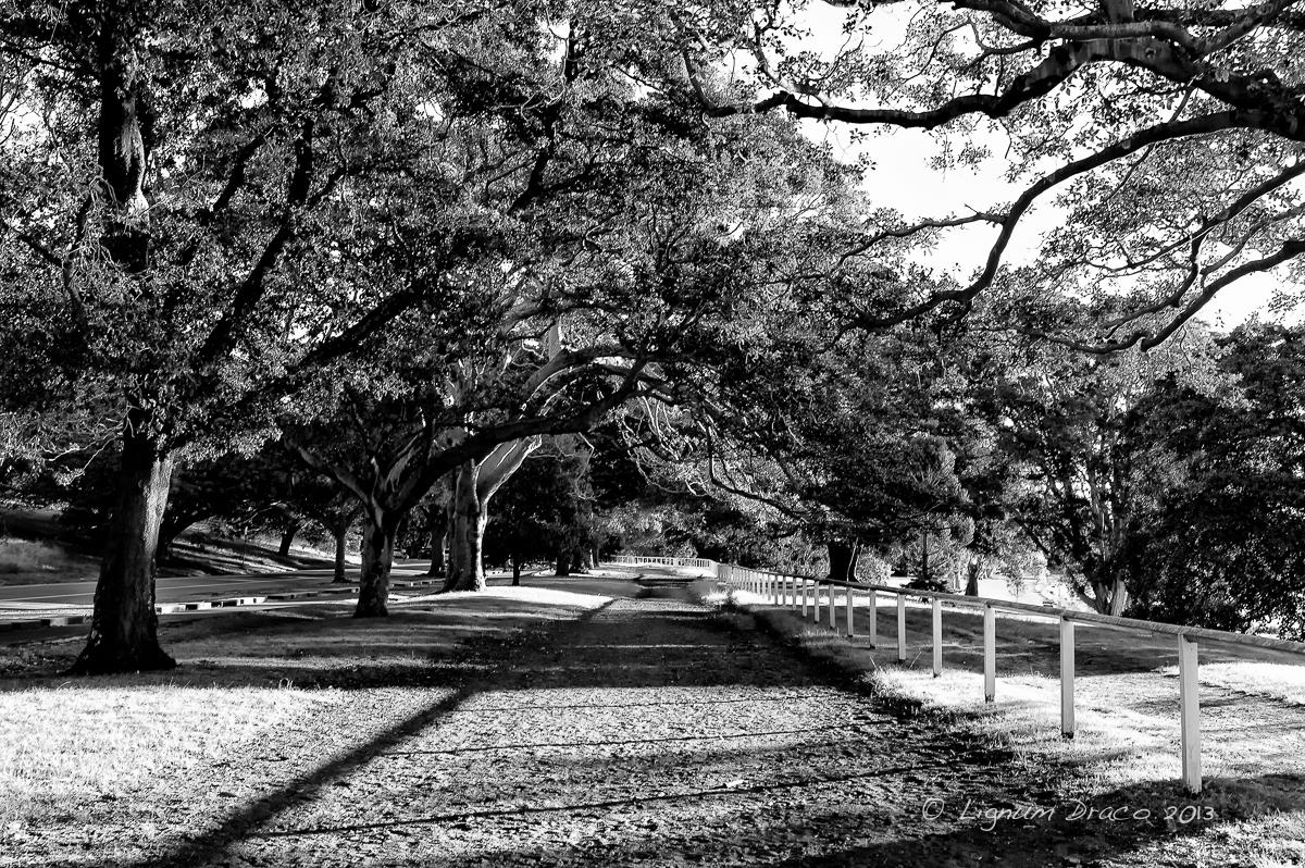 Autumn afternoon 2
