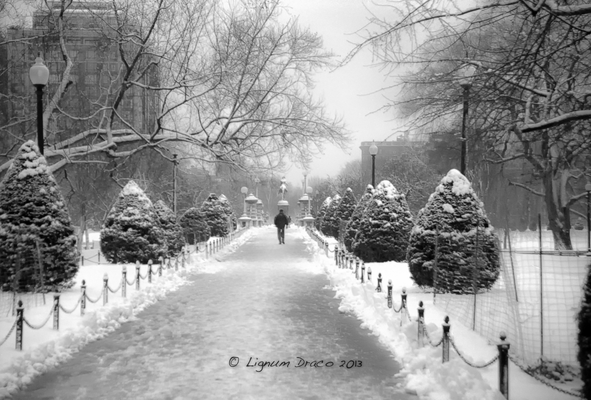 Boston Common bw