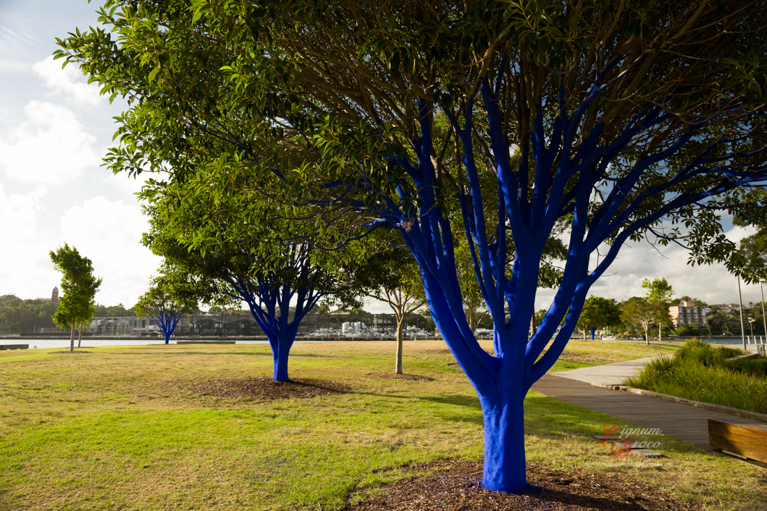 The blue trees 1