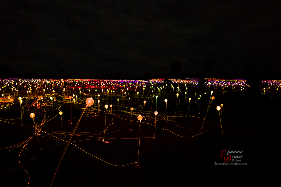 Field of Light 6