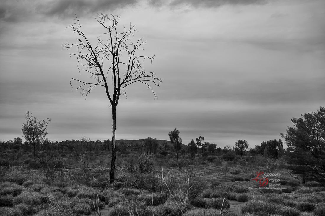 Uluru deadwood 11