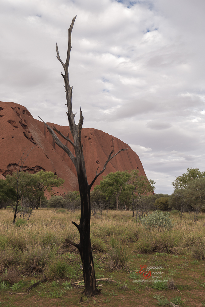 Uluru deadwood 12