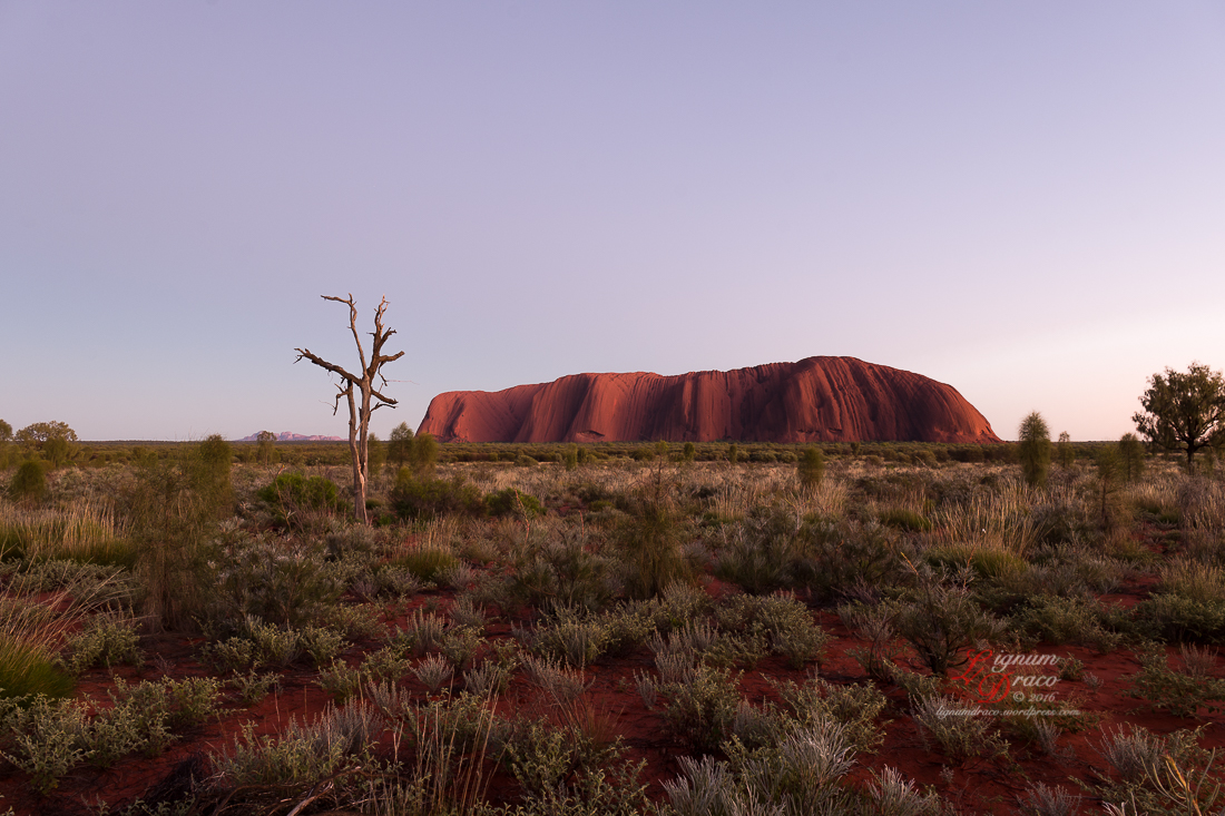 Uluru deadwood 15