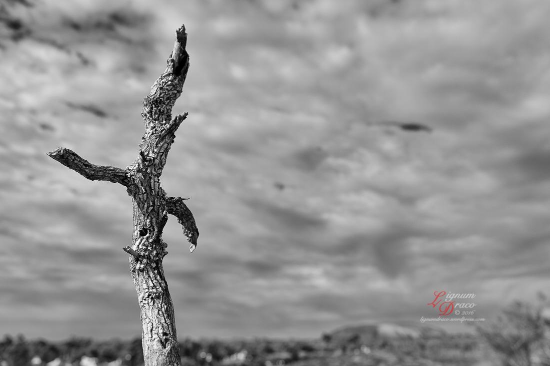 Uluru deadwood 5
