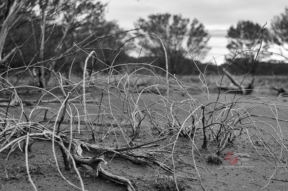 Uluru deadwood 8