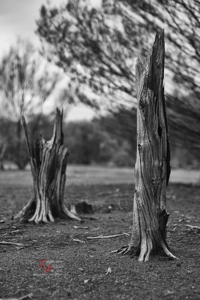 Uluru deadwood 9