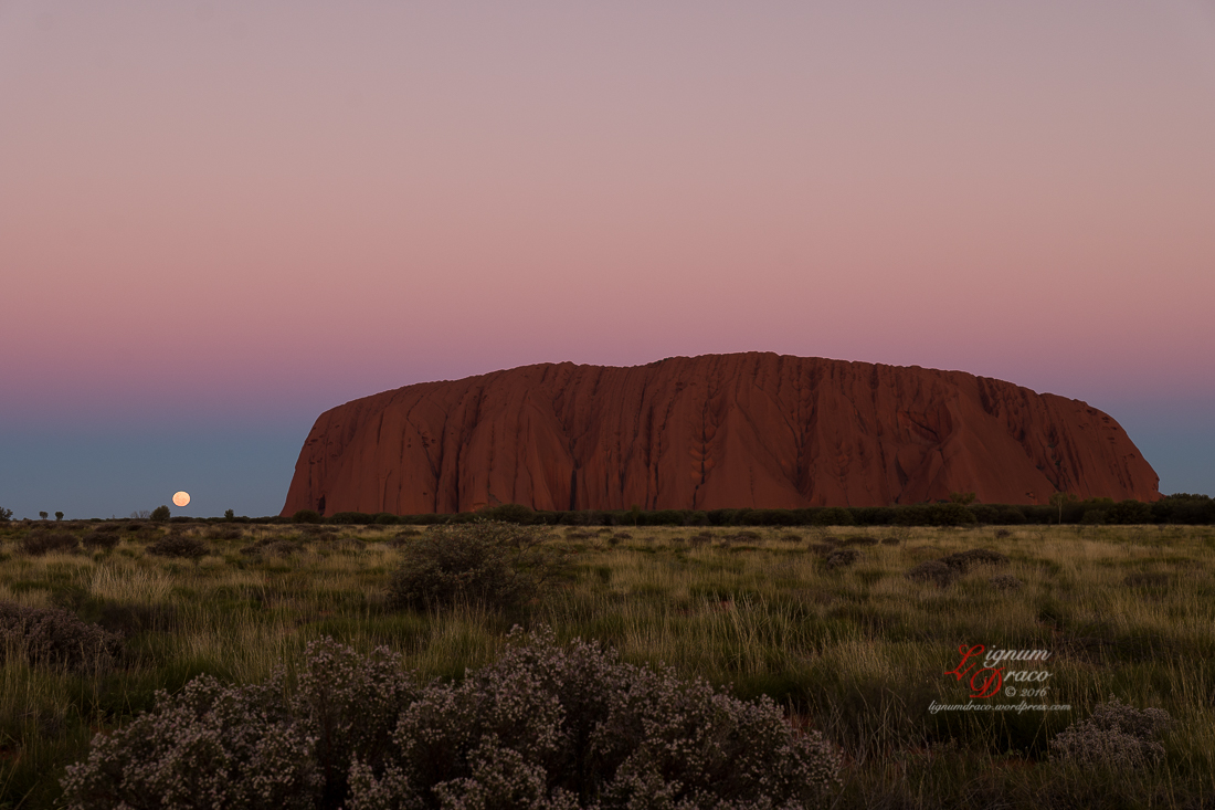 Moonlight Serenade at Uluru 8
